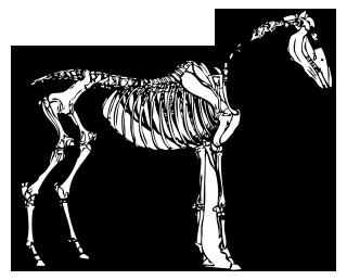 Noni für Pferde | Noni Equine